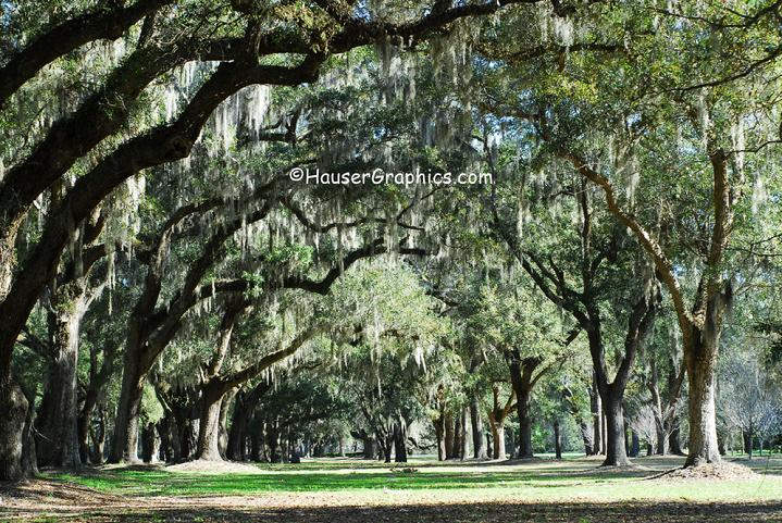 Fenwicke Hall grounds on John's Island, SC