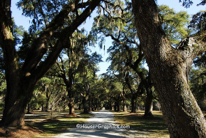 Fenwick Oak Allee on John's Island, SC